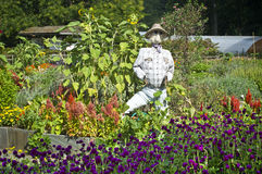 Σκιάχτρο μπαλωμάτων κήπων Στοκ Φωτογραφία