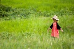Σκιάχτρο σε έναν τομέα ρυζιού σε Pai, Ταϊλάνδη Στοκ φωτογραφίες με δικαίωμα ελεύθερης χρήσης