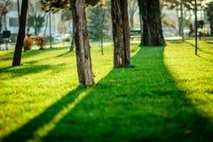 Σκιά δέντρων στην ηλιόλουστη ημέρα του φθινοπώρου στο πάρκο Στοκ εικόνα με δικαίωμα ελεύθερης χρήσης