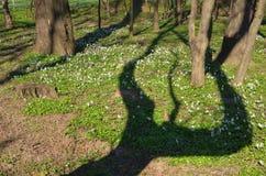 Σκιά δέντρων Στοκ Εικόνες