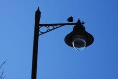 Σκιά λαμπτήρων οδών Στοκ Εικόνες