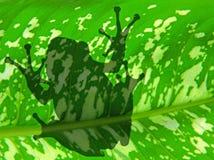 σκιά βατράχων Στοκ φωτογραφία με δικαίωμα ελεύθερης χρήσης