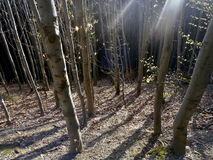 Σκιά εναντίον του φωτός στοκ φωτογραφίες