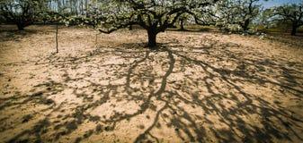 Σκιά ενός δέντρου Στοκ Εικόνες