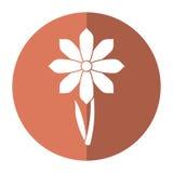Σκιά διακοσμήσεων άνοιξη λουλουδιών Gerbera Στοκ εικόνα με δικαίωμα ελεύθερης χρήσης