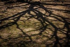 Σκιά κλάδων στο έδαφος Στοκ Εικόνες