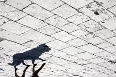 Σκιά περιπλανώμενων σκυλιών Στοκ φωτογραφία με δικαίωμα ελεύθερης χρήσης