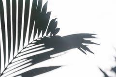 Σκιά σκιαγραφιών των φύλλων φοινικών στον άσπρο τοίχο Στοκ Εικόνα