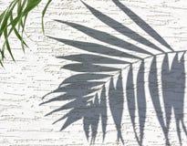 Σκιά στους φοίνικες Στοκ φωτογραφία με δικαίωμα ελεύθερης χρήσης