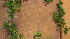 Σκιά στο συγκεκριμένο υπόβαθρο φιλμ μικρού μήκους