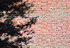 Σκιά του δέντρου στο τουβλότοιχο Στοκ φωτογραφία με δικαίωμα ελεύθερης χρήσης