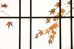 Σκιά των φύλλων φθινοπώρου Στοκ Εικόνες
