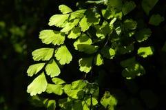 σκιά φυλλώματος Στοκ Εικόνες