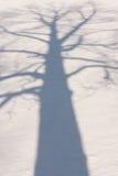 Σκιά 3 χειμερινών δέντρων Στοκ Φωτογραφία
