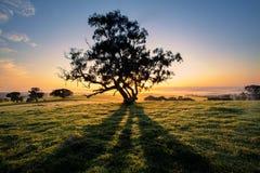 Σκιές δέντρων στοκ εικόνες
