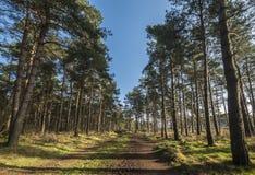 Σκιές δέντρων Στοκ εικόνα με δικαίωμα ελεύθερης χρήσης