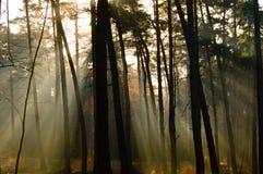 Σκιές από τα δέντρα και ήρεμο φως του ήλιου στο δάσος Στοκ φωτογραφίες με δικαίωμα ελεύθερης χρήσης