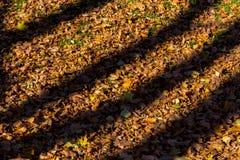 Σκιές από τα δέντρα στα πεσμένα φύλλα φθινοπώρου Στοκ φωτογραφίες με δικαίωμα ελεύθερης χρήσης
