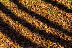 Σκιές από τα δέντρα στα πεσμένα φύλλα φθινοπώρου Στοκ Εικόνα