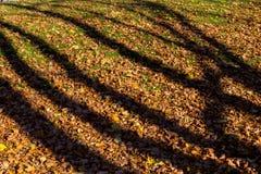 Σκιές από τα δέντρα στα πεσμένα φύλλα φθινοπώρου Στοκ Φωτογραφία
