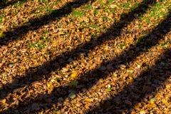 Σκιές από τα δέντρα στα πεσμένα φύλλα φθινοπώρου Στοκ εικόνα με δικαίωμα ελεύθερης χρήσης