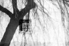 Σκιές από τα δέντρα ιτιών στον τοίχο Στοκ εικόνα με δικαίωμα ελεύθερης χρήσης