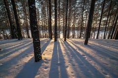 Σκιές από τα δέντρα στο χειμερινό δάσος στο χιόνι Στοκ Εικόνες