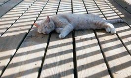 σκιές γατών Στοκ φωτογραφία με δικαίωμα ελεύθερης χρήσης