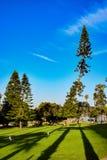 Σκιές δέντρων στη Λα Χόγια, Καλιφόρνια Στοκ φωτογραφίες με δικαίωμα ελεύθερης χρήσης