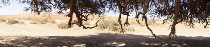 Σκιές ενός δέντρου στην κοιλάδα θανάτου Στοκ Φωτογραφίες
