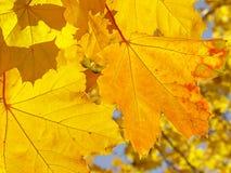 σκιές κίτρινες Στοκ Εικόνες