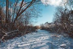Σκιές και ίχνη στο χιονώδες ίχνος την ηλιόλουστη ημέρα Στοκ Εικόνες