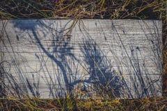 Σκιές που επισύρουν την προσοχή το πεύκο στην ξύλινη διάβαση Διάβαση πεζών στο δάσος, εθνικό πάρκο Kemeri, Λετονία Στοκ Φωτογραφίες