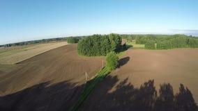 Σκιές πρωινού θερινών τελών στον πρόσφατα σπαρμένο αγροτικό τομέα, εναέρια άποψη φιλμ μικρού μήκους
