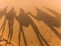 σκιές Σαχάρας καμηλών Στοκ φωτογραφίες με δικαίωμα ελεύθερης χρήσης