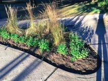 Σκιές σκιαγραφιών φθινοπώρου του κοριτσιού στο πάρκο Στοκ φωτογραφίες με δικαίωμα ελεύθερης χρήσης