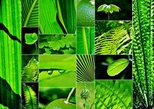 Σκιές του πράσινου κολάζ Στοκ εικόνα με δικαίωμα ελεύθερης χρήσης