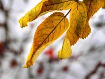 Σκιές του χειμώνα Στοκ Εικόνα