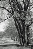 Σκιές των δέντρων πτώσης και της μόνης εθνικής οδού Στοκ Εικόνες