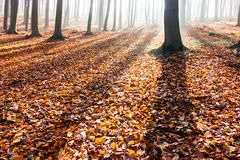Σκιές των δέντρων στο δάσος φθινοπώρου Στοκ Φωτογραφία