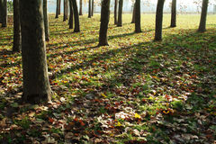 σκιές φύλλων φθινοπώρου Στοκ εικόνα με δικαίωμα ελεύθερης χρήσης