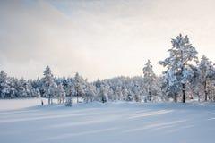 σκιές Στοκ Εικόνα