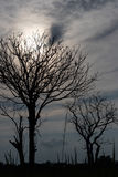 Σκιαγραφήστε ένα δέντρο χωρίς φύλλα Στοκ εικόνες με δικαίωμα ελεύθερης χρήσης