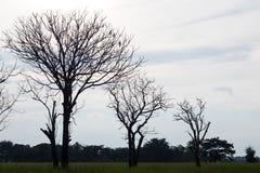 Σκιαγραφήστε ένα δέντρο χωρίς φύλλα Στοκ φωτογραφία με δικαίωμα ελεύθερης χρήσης