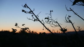 Σκιαγραφία άκρων που φυσά στο αεράκι πρωινού φιλμ μικρού μήκους
