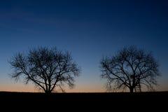 Σκιαγραφία δέντρα στοκ εικόνες