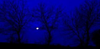 Σκιαγραφία, δέντρο, μυστήριο, σκοτεινό Στοκ Εικόνα