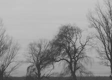 Σκιαγραφία δέντρων - γραπτή Στοκ Φωτογραφία