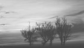 Σκιαγραφία δέντρων - γραπτή Στοκ εικόνες με δικαίωμα ελεύθερης χρήσης