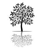 Σκιαγραφία δέντρων με τα φύλλα Στοκ φωτογραφία με δικαίωμα ελεύθερης χρήσης